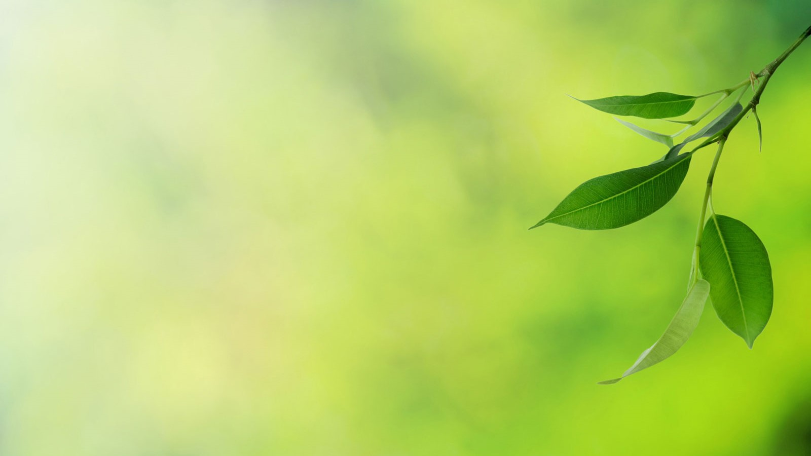 Green leaf bg